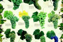 Wines / by Natalie Ellis