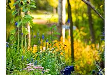 Yard and Flowers / by Rebecca Arbogast