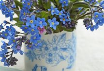 ✿⊱╮Forget.me.not / Blue blossoms are a rarity in nature.  These little flowers remind me of people that I miss, reminding me to not forget people that I love.   / by Carol Hardin