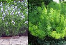 drought tolerent plants / by Terri Lea Worthington