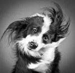 Pets / by Lisa Garner