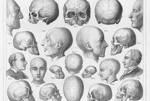 Anatomy / Antique, fun, and just plain cool anatomy depictions / by HealthRx Corporation