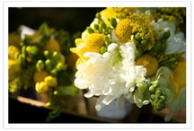 Wedding Flowers / by Phyllis Muller