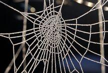Spider Webs / by JuiceARollOfCandy