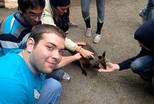 Animals Abroad / by KU Study Abroad