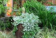 garden / by sbcarolina