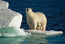 Polar Bears for Jake / by Kristen Chirafisi