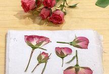 Crafts / by Christina Toyama