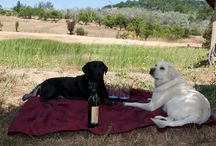 Winery Animals / All the Animals in charge of the Valley's Wineries / by Platypus Tours