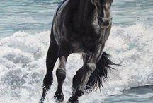 Horses / by Hildegarde ~