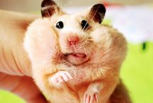Ratty Love / Rodent Love ~~ little ears, eyes, tongues, tails & toes == BIG HEARTS  / by Ann Richards