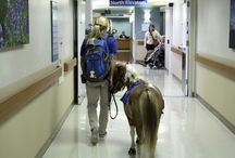 Animal Therapy at Hospitals / by HEALTHeCAREERS