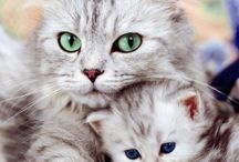 Beauty Of All Creatures 1 / Cats and their helps / by Kathy Fuselier