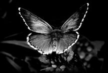 Butterflies and Insects / People don't know what butterflies goes through before getting beautiful. / by ☻♥Annie♥☻