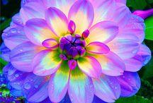Flowers, flowers! / by Debbie Kaspar