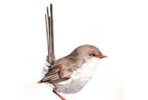 BIRDS AND NEST / by Karin Imola Gottig