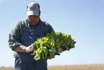 Farm (farmcarolina.com) / by farm carolina