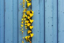 Yellow and Blue / by Vicki Horton