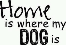 Dog Lover /Animal Lover♥ / by Sally Silva