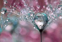 Photography / by Diana Ivanova