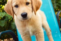 Puppy Love / by Lailee LaBarbera