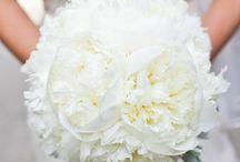 Wedding Bells / by Molly Cashman