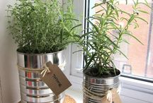 Container gardening / by Halley Walker