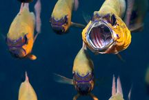 angry fish/angry bird / by Donna Hyland