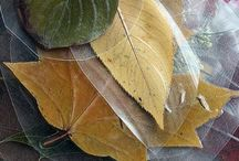 Leaves / by Nancy Young