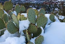 Arizona / by Christine Reed Brown
