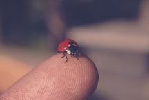 Ladybugs / by Terri VanTassel