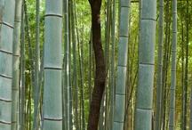 Bamboo / by Silvana Bernini