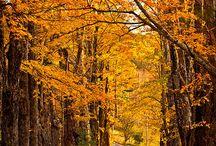Country Roads / by Darrold & Janie Dotson