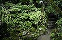 garden / by Vicky Draper