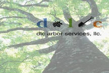 DLC Arbor Services / We are your one-stop shop for expert tree pruning, large tree removal, and general tree health care by certified arborists and expert support staff. We have been caring for trees for 30 years and can provide the attention they require to live a long and healthy life. arbor@dlclandscape.com 303-378-8000 / by MK Marketing