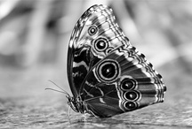 Black & White Photography / by Loraine DiCerbo
