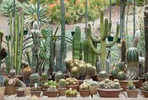 Gardens! / by NRDC BioGems