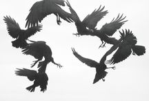 CROW, RAVEN AND MAGPIE / by Ely Breckenridge