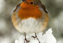 Bleak Mid-Winter / by Karen Fontaine