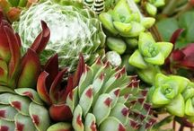 Stunning Succulents / by Marianne Byrum