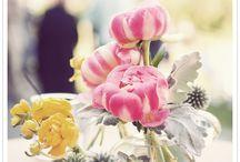 Gorgeous Gardening / by Dannii Minogue