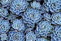 fleurs et plantes / by Sherita Nichols-Fort
