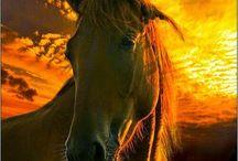 Más caballos / by Leticia Siañez