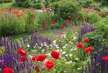 Pretty Gardens / by Sherry Ortega