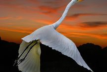 BIRD/ 鳥 / by AKIRA