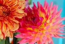garden ideas / by Ginger Lushenko