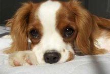 Pets & Cute Animals / by Vivian Ericson