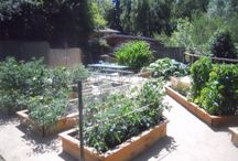 Gardening ideas / Raised beds and rotating crops. / by Rosalin O'Rear
