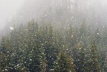WinterWonderland. / by Averi Jenkins