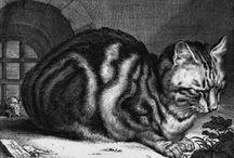 Historical Cats / by TwoNerdyHistoryGirls ***